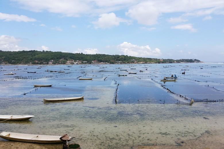 Lokasi budidaya rumput laut di Desa Lembongan, Bali (Kurnia/detikTravel)