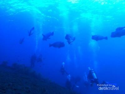 Berburu Objek Foto Bawah Air nan Menawan di Tulamben, Bali
