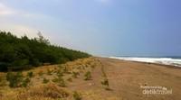 Garis Pantai Lembupurwo yang mulai menghijau