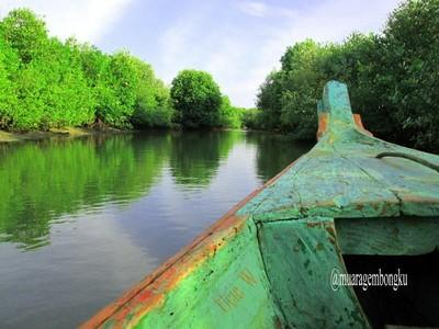 Muara Gembong, Mangrove Cantik yang Tersembunyi di Bekasi