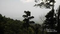 Hutan Gunung Aseupan yang masih cukup rapat