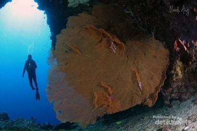 Begini Indahnya Taman Bawah Laut Bunaken di Manado
