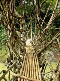 Jembatan akar yang unik