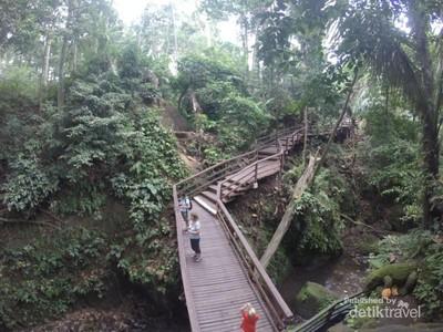 Monyet-monyet Menggemaskan di Bali