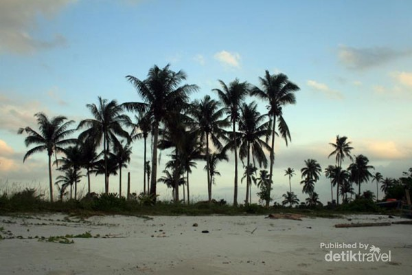 pepohonan kelapa yang tumbuh tepi pantai
