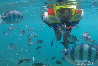 6 Laut Cantik untuk Snorkeling Pertama Kali