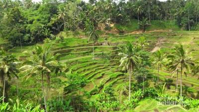 Ceking Terrace, Sisi Lain Bali yang Harus Kamu Datangi