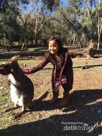 Si kecil Zita membelai anak kanguru