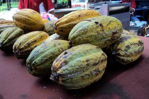 Asyiknya Jalan-jalan Sambil Belajar Tentang Cokelat di Kampung Coklat Blitar