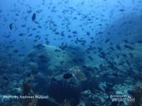 Ribuan ikan menari di terumbu