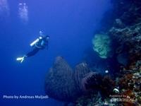 Penyelam menikmati keindahan bawah air Batu Kapal