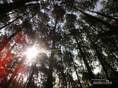 Ide Weekend Gateway Kali Ini: Hutan Pinus Cigombong, Bogor