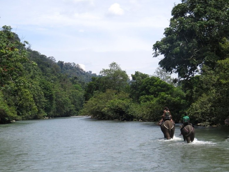 Menjelajahi Taman Nasional Gunung Leuser (Taman Nasional Gunung Leuser/Facebook)