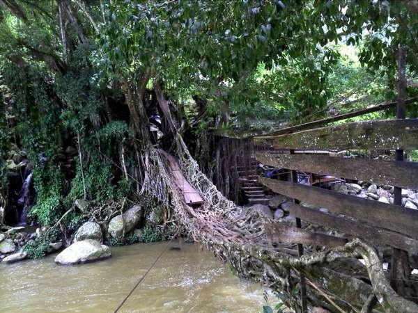 Jembatan Akar di Sumatera Barat (Kinanti Desyva/ACI)