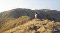 Padang rumput dan bukit yang cokelat keemasan