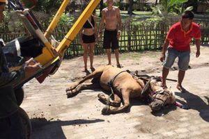 Ramai di Facebook, Protes Turis Soal Kuda Pingsan di Gili Trawangan