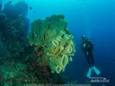 Pengalaman Menyelami Alam Bawah Laut Tobelo, Morotai, dan Jailolo