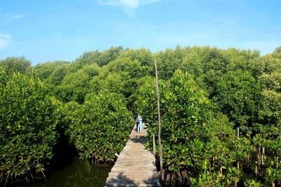 Masih Libur? Yuk Jelajah Hijaunya Hutan Mangrove Jakarta