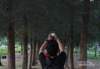 Deretan pohon Pinus menjadi spot favorit hunting