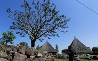 Kampung adat Ruteng Puu