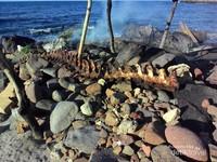 Yang tersisa dari lumba-lumba hasil buruan di Lamalera