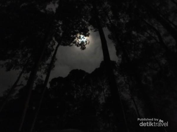 Bulan tertutup pepohonan