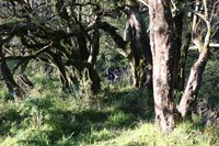 Gugusan Taman Bonsai