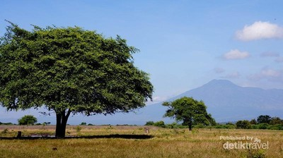 Taman Nasional Baluran, Situbondo Rasa Afrika