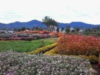 Pesona taman bunga
