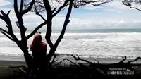 Jejak cemara di tepi pantai
