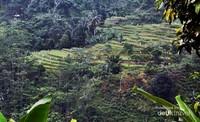 Panorama landscape sepanjang perjalanan kita menyusuri asri-nya Leuwi Hejo. terletak di kampung Wangun Cileungsi, desa Karang Tengah Kecamatan Babakan Madang Sentul Bogor