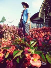 Bunga balinea khas kebun begonia