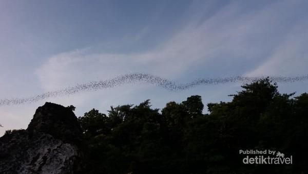 Ribuan burung terlihat di Bukit Suci, Gresik. Mereka berbaris terbang dengan formasi yang unik untuk pulang ke sarang pada sore hari.