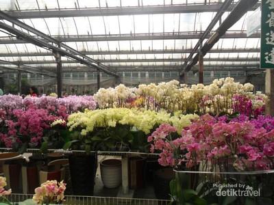 Terpesona Keindahan Anggrek di Taida Horticulture, Taiwan