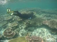 Spot terumbu karang yang masih alami adalah daya tarik Kepulauan Balabalakang. namun terumbu karang pun tidak luput dari kerusakan akibat penggunaan bom ikan. Tapi tenang saja, kepulauan balabalakang itu luas dan masih banyak spot terubu karangnya yang masih alami, belum tersentuh dan belum didokumentasikan