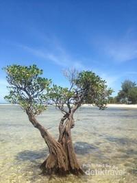 Bentuk Unik dari tanaman Mangrove