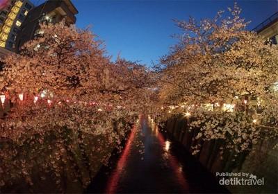 Menikmati Sakura di Tempat-tempat yang Tak Biasa