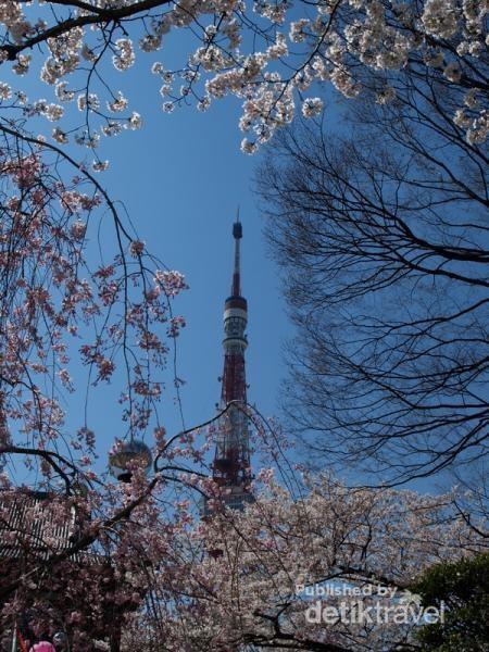 Tokyo Tower dan Sakura