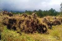 Batu-batu lava bekas erupsi yang berserakan