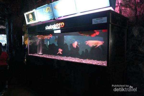 Salah satu akuarium kecil