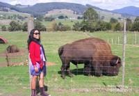 Berpose dengan latar bison dan perbukitan
