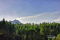 Gunung Merapi dengan latar depan hutan cemara bisa dinikmati disini