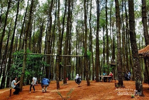 Suasana pengunjung Hutan Pinus Pengger
