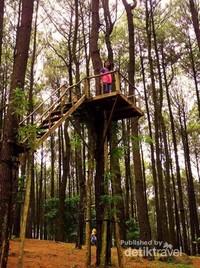 Spot selfie tangga pohon pinus Pengger