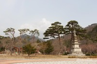Pohon pinus tertua di Taman Nasional Seoraksan