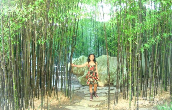 Taman bambu yang indah