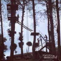 Uji adrenalin di antara pohon-pohon pinus yang tinggi di Puncak Lawang