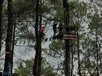Menyeberangi pohon-pohon pinus di ketinggian Puncak Lawang