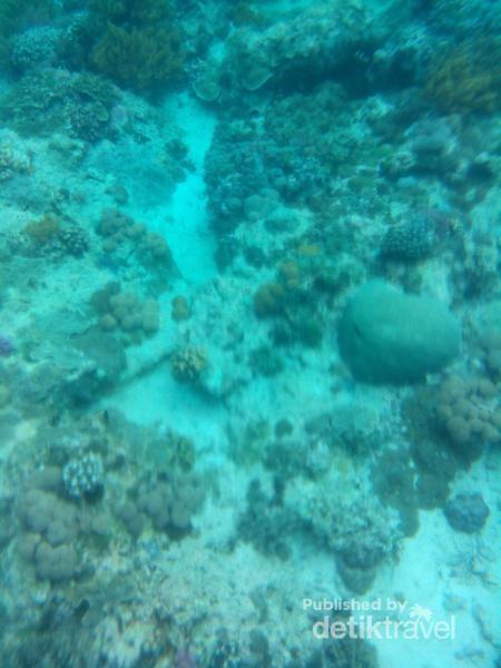 Pemandangan bawah laut spot snorkeling dekat tebing Pulau Kambing