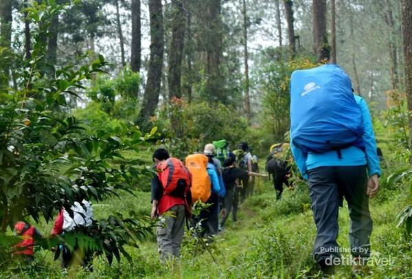 Tracking pepohonan pinus Gunung Merbabu